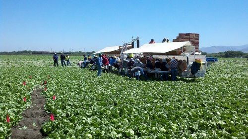 Do You Know Where Your Salad Comes From? My Trip To Monterey Bay With Dole