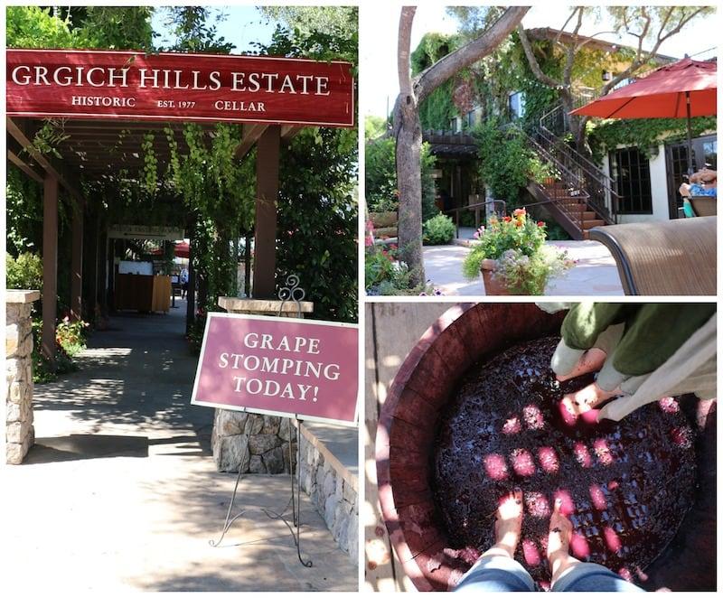 Grape Stomping At Grgich Hills Estate - Napa