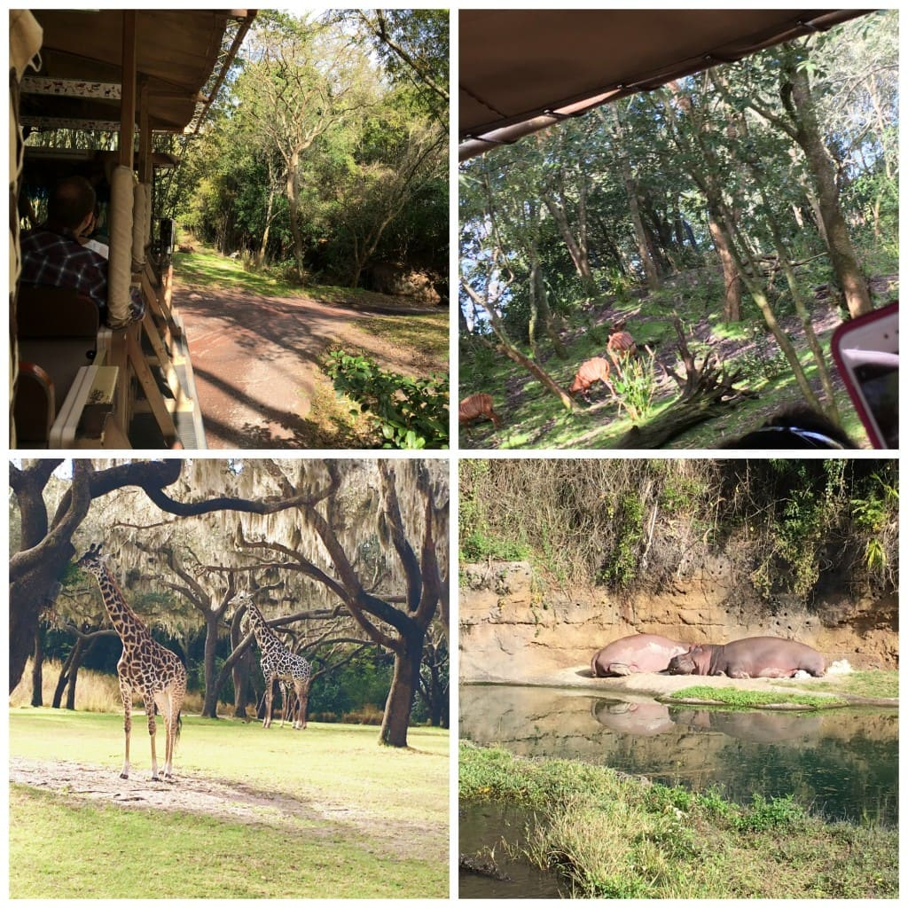 Safari Ride Animal Kingdom Animal View