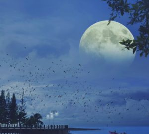 The Full Moon Is The Reason Why You Aren't Sleeping