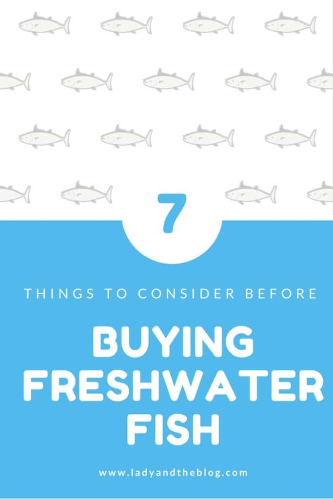 7 Things To Consider Before You Buy Freshwater Fish