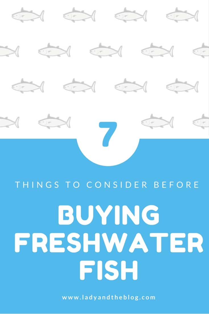 7 Things To Consider Before Buying Freshwater Fish
