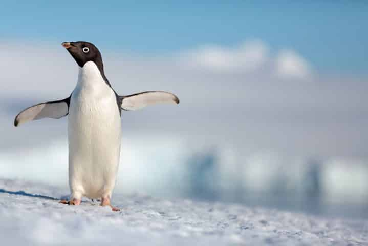 Disneynature's PENGUINS Trailer