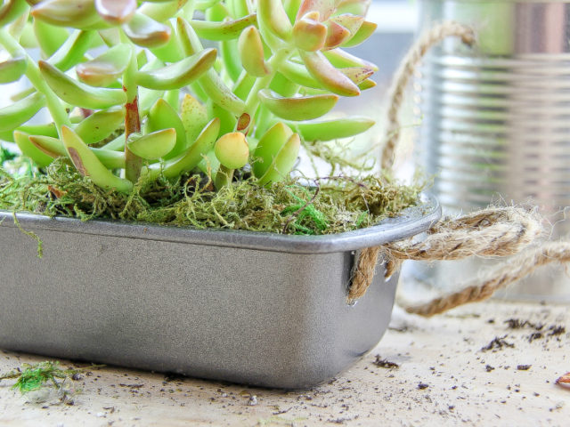 turn a cake tin into a succulent planter