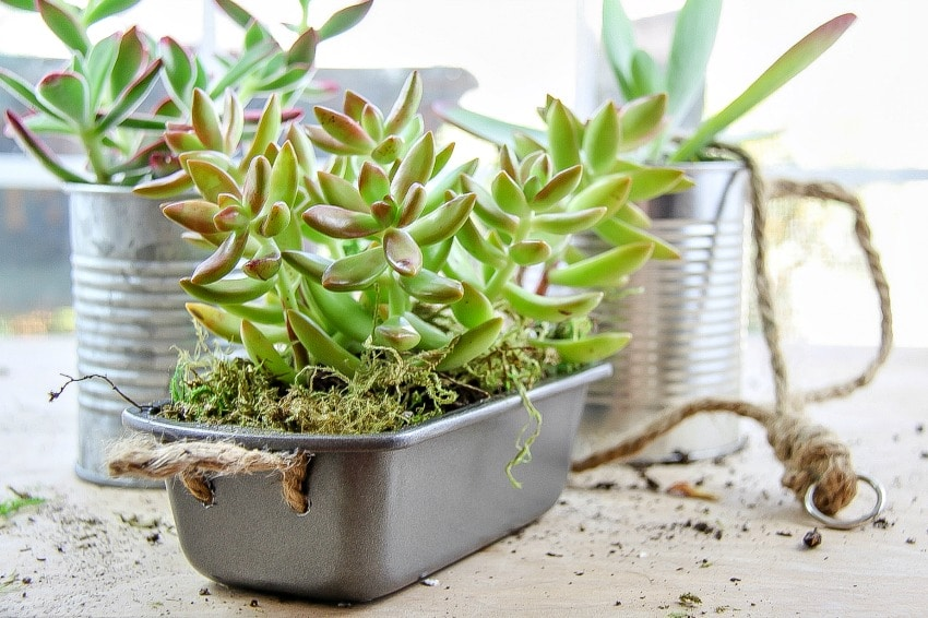 How To Turn A Metal Container Into A Planter