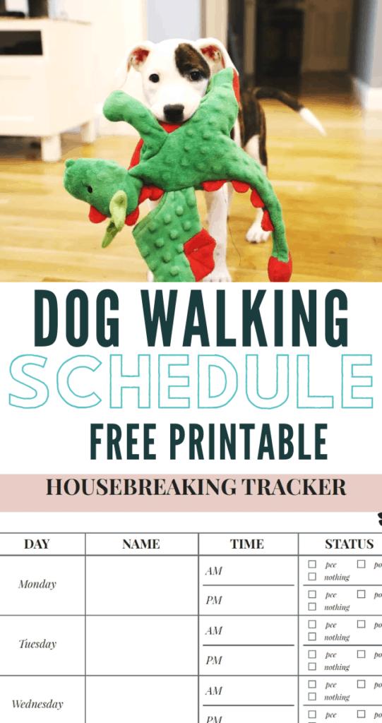dog walking schedule