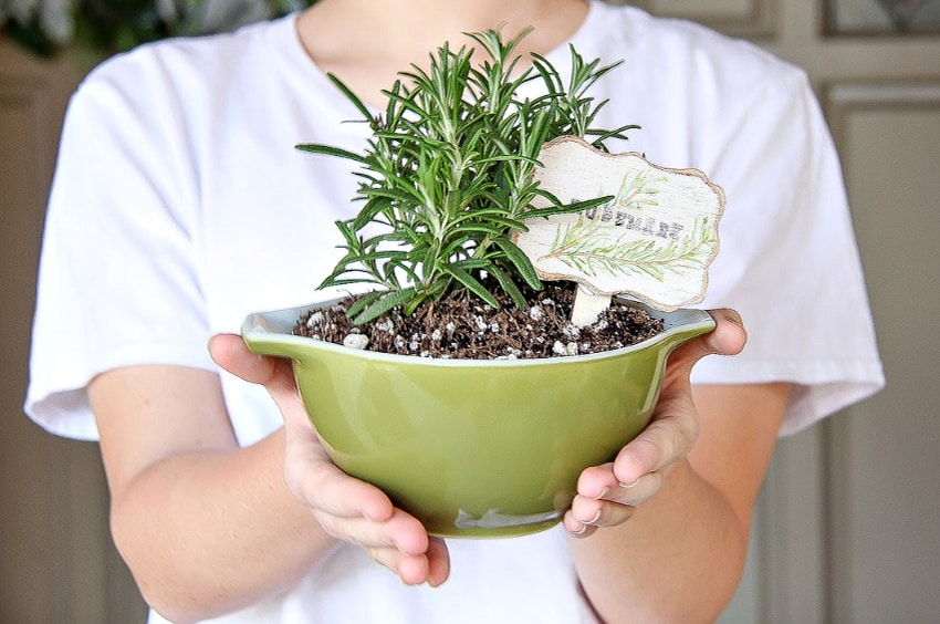 Rosemary DIY Garden ideas