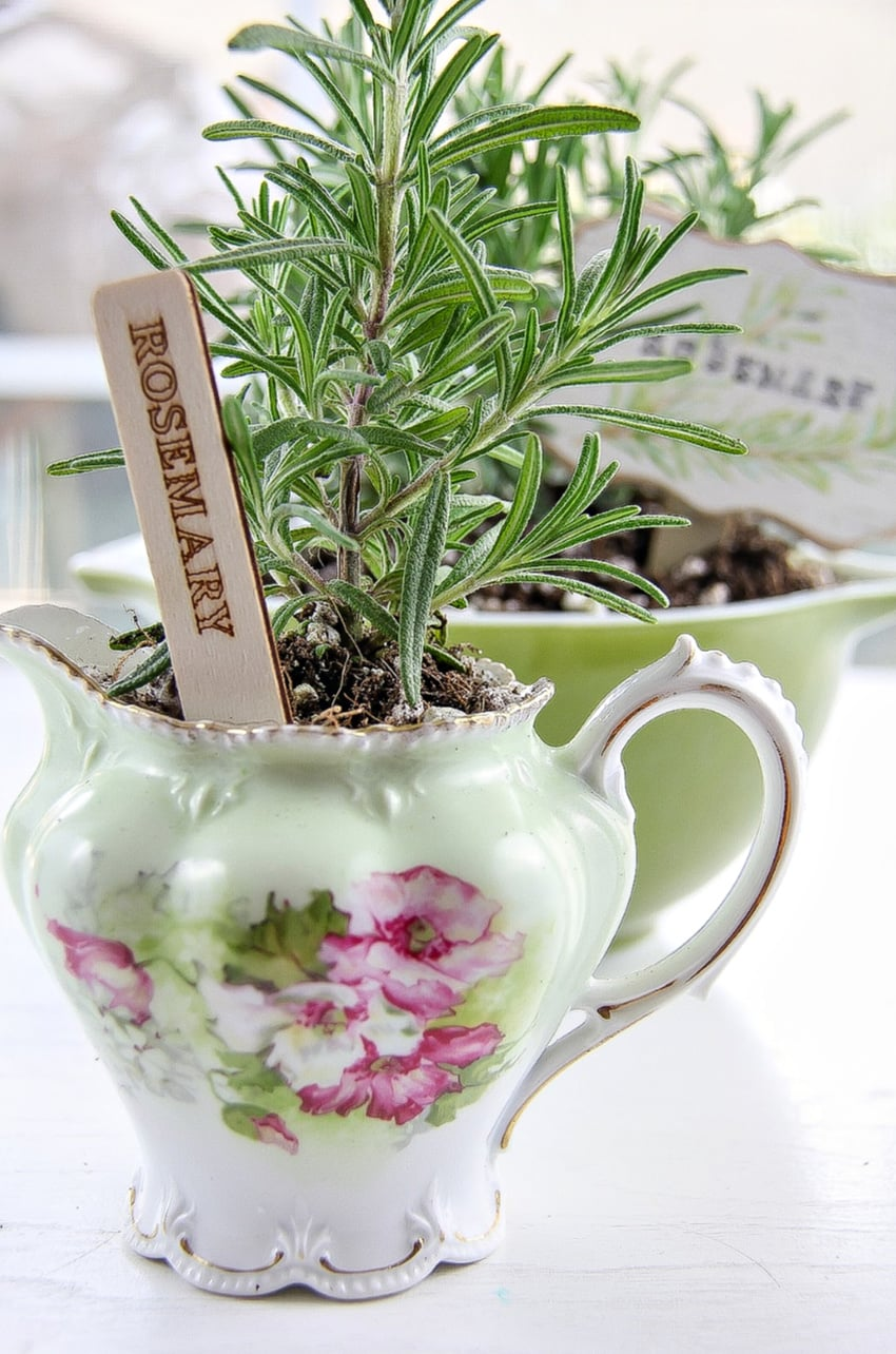 DIY Planters - Rosemary