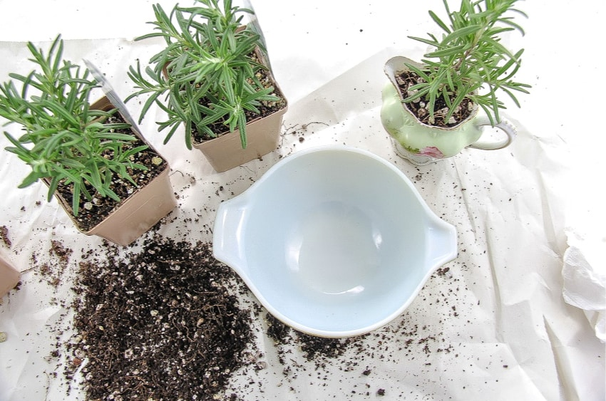 How To Get Started Making A DIY Herb Planter