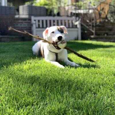 dog with a ball and stick