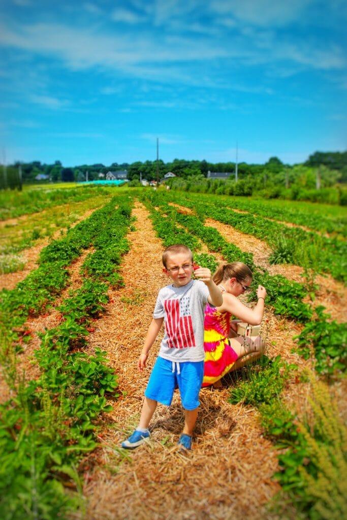 strawberry picking tips