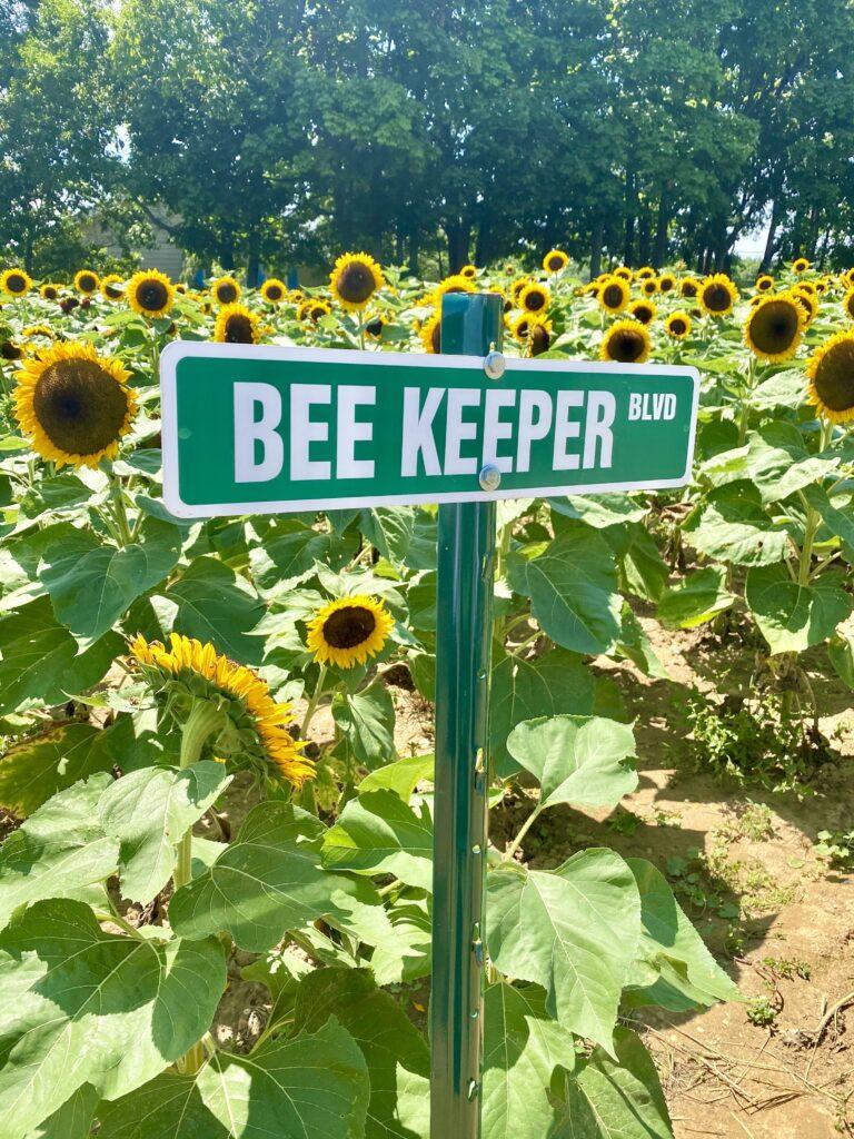 sunflower maze north fork