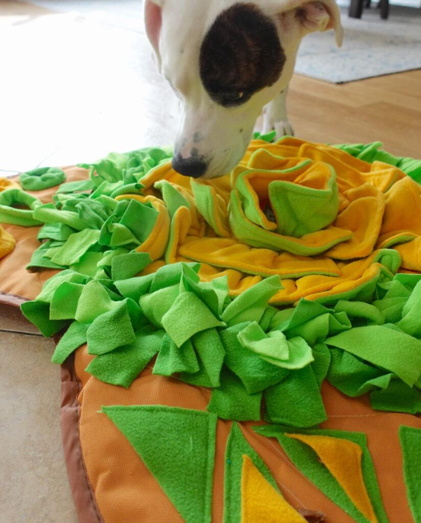dog treat hiding mat
