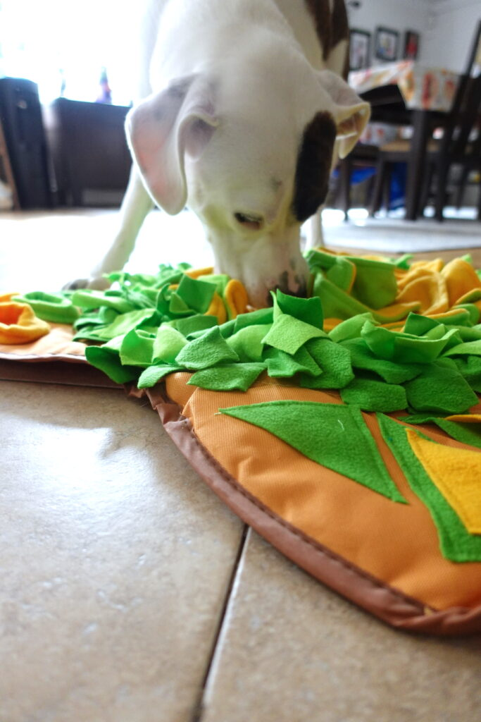 foraging mat for pets