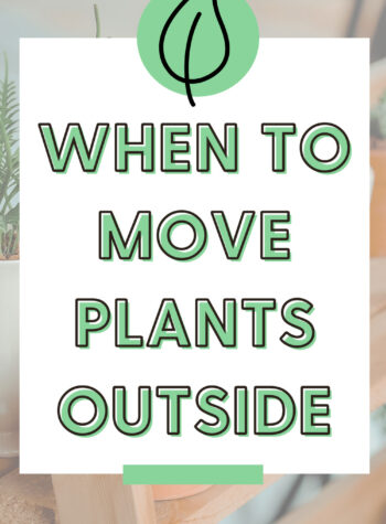 What Temperature Is It Safe To Put Houseplants Outside