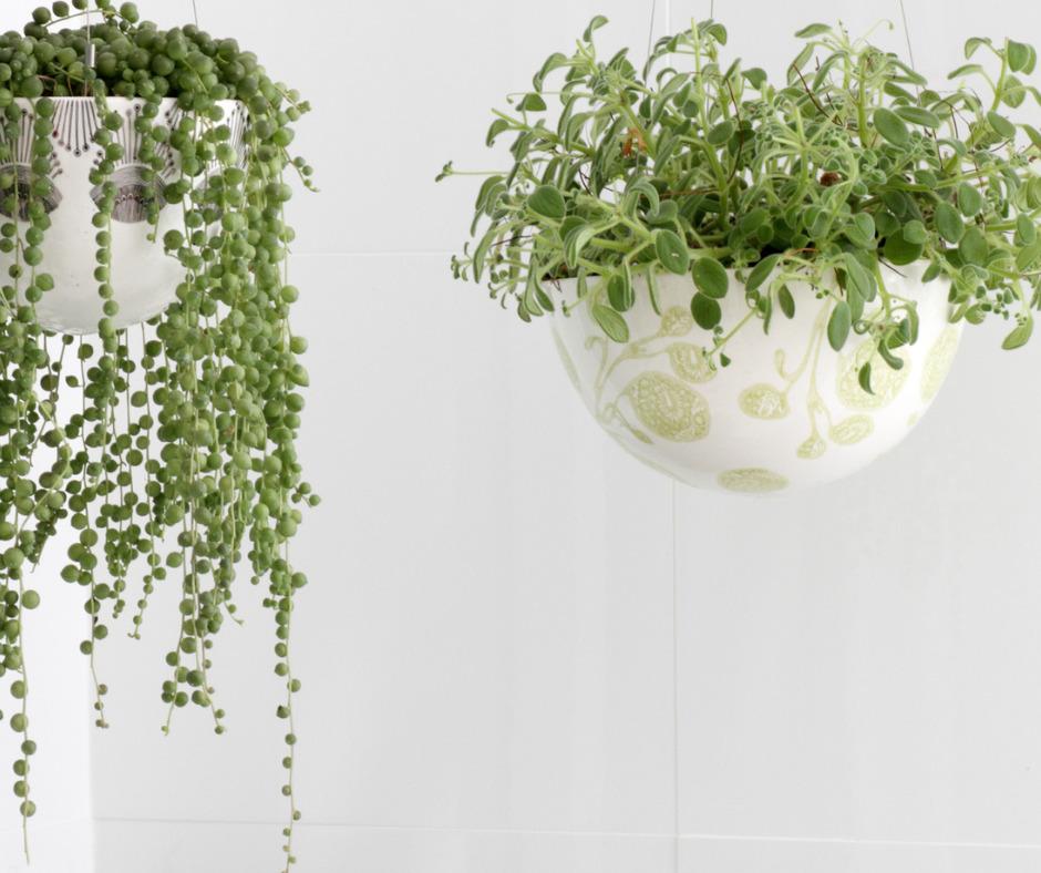 indoor outdoor plants