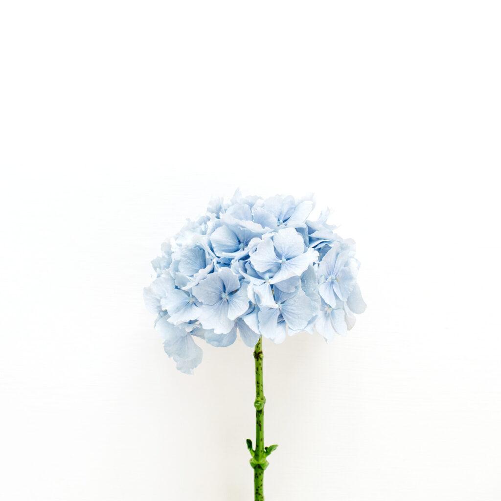 Blumen für deine Mutter