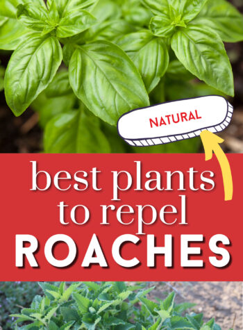 best plants to repel roaches