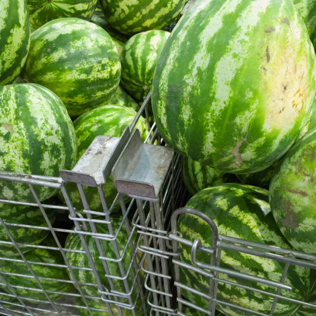 ripe watermelon tips